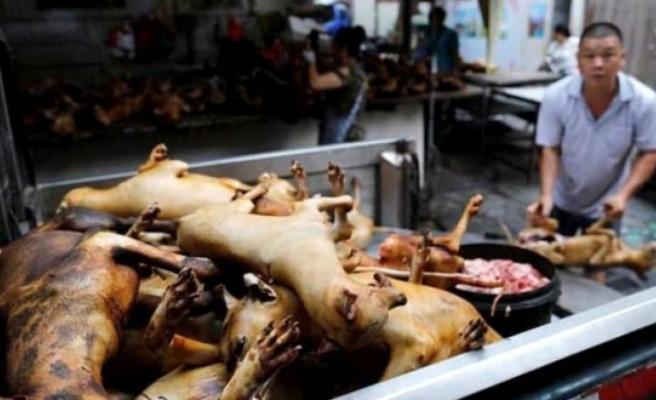 Koronavirüse sebep olan Çin yeni salgınlara davetiye çıkarıyor! Köpek eti festivali başladı