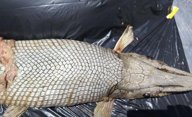 Taşkent Doğa Parkı, Gönyeli Barajı kıyısında bulunan balıkla ilgili açıklama yaptı