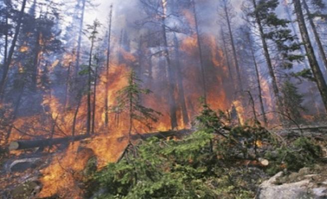 Orman Dairesi'nden yangın uyarısı