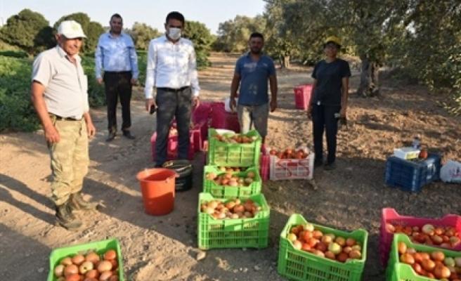 Oğuz, Tepebaşı, Çamlıbel ve Geçitköy bölgelerindeki domates üreticilerini ziyaret etti