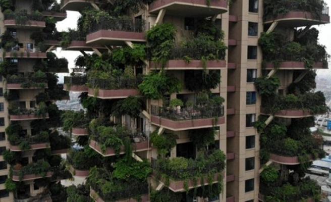 Yeşil konut projesi, felakete dönüştü! Bitkiler balkonları yuttu, sinekler evleri istila etti