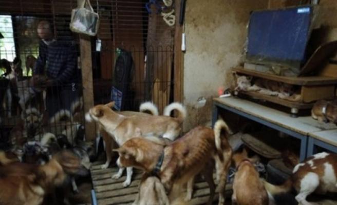 30 metrekarelik evde 164 köpek ile yaşayan aile şikayet edildi
