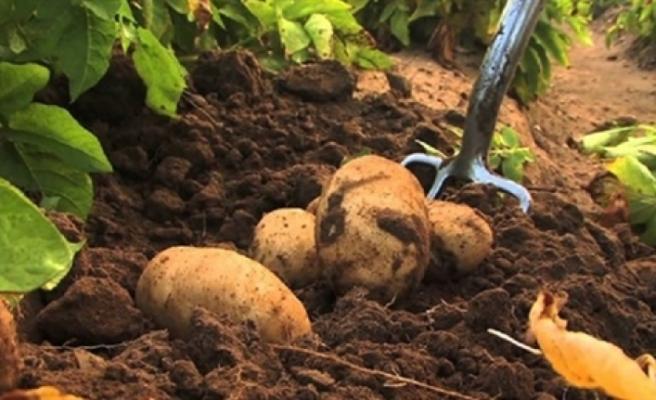 Patates üreticilerine duyuru