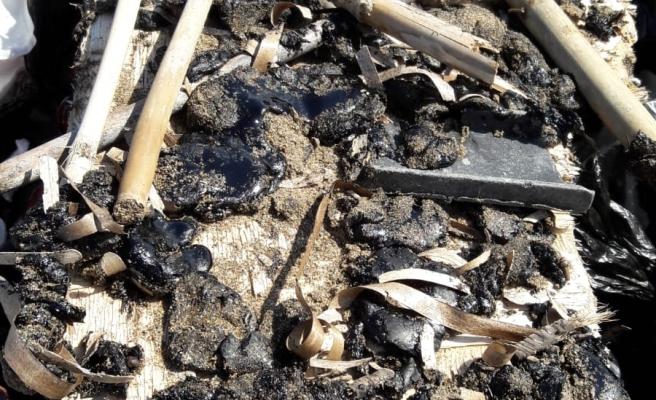 Alagadi sahiline vuran katranın temizlendi