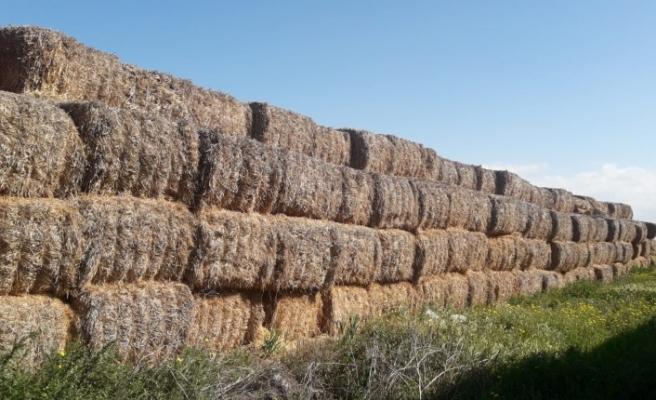 İhtiyaçlı üreticilere arpa sap balası satışı