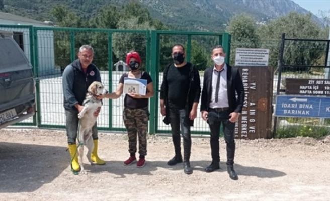 Girne'de sokak hayvanları için rehabilite ve sahiplendirme çalışmaları sürüyor