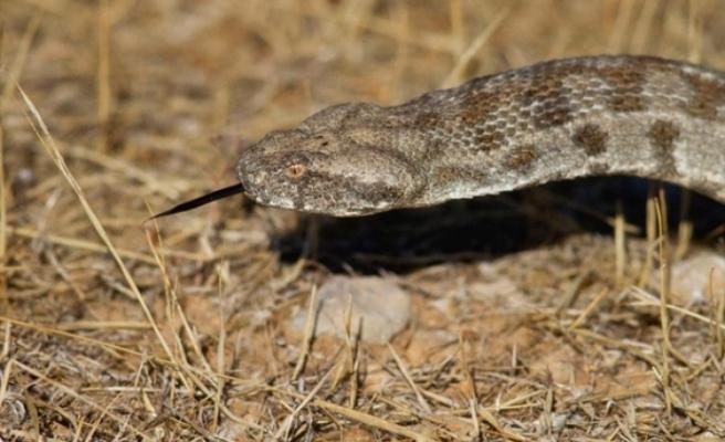 Doç.Dr.Nazım Kaşot Kıbrıs'ın yılanlarını TAk'a anlattı