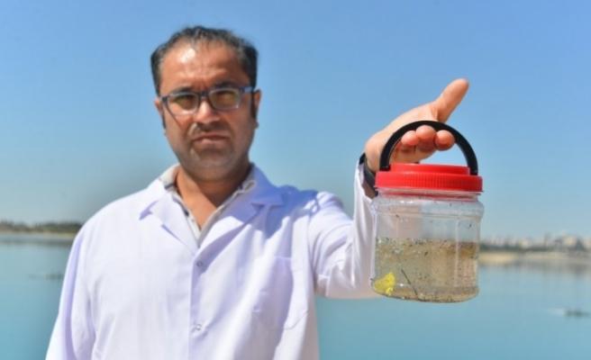 Karadeniz'de sel sonrası yeni tehlike