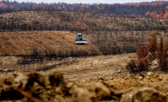 Antalya'da yanan ormanlar 100 milyon fidanla yeniden yeşerecek
