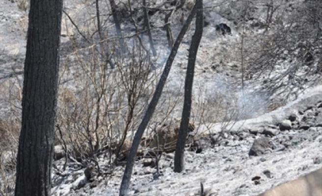 Bafra'da ormanlık alanda yangın