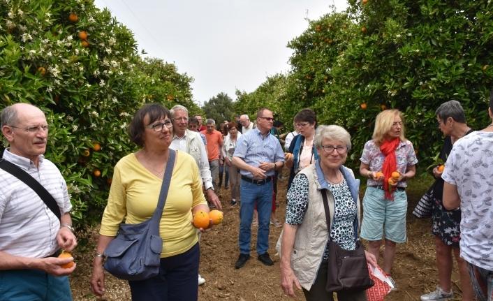 Turistler portakal bahçelerinde