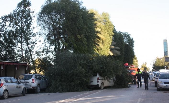 Ağaç, aracın üstüne düştü